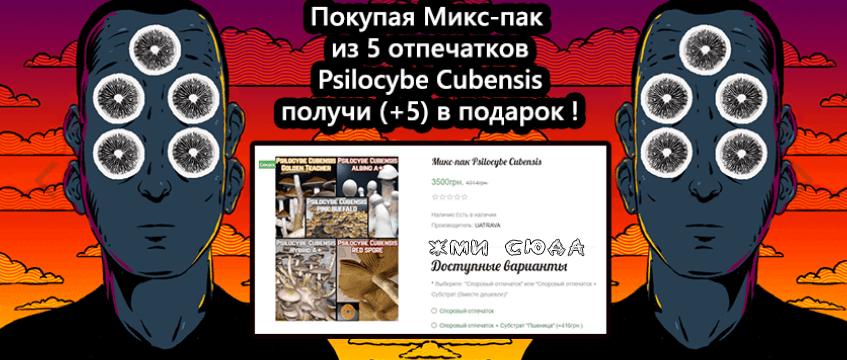 Микс Psilocybe Cubensis в подарок
