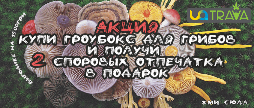 Акция: Гроубокс для грибов и 2 споровых отпечатка