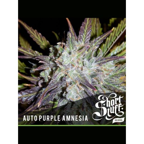 Auto Purple Amnesia