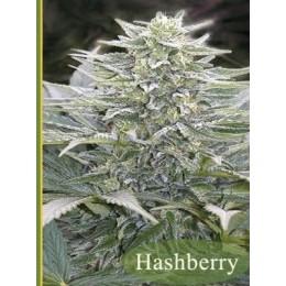 Hashberry