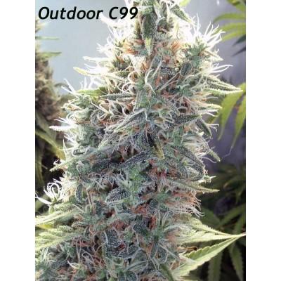 Outdoor C99