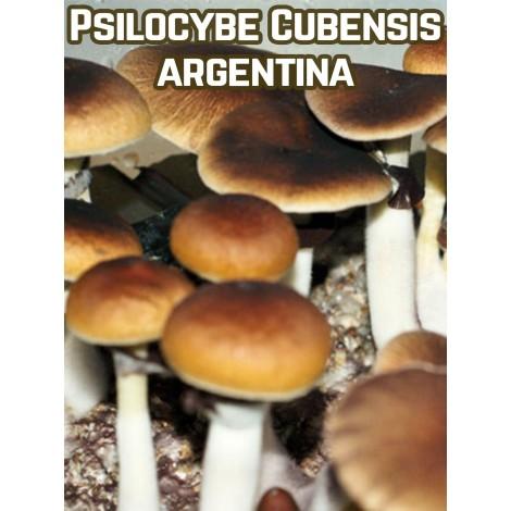 Psilocybe Cubensis Argentina
