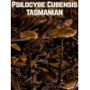 Psilocybe Cubensis Tasmanian