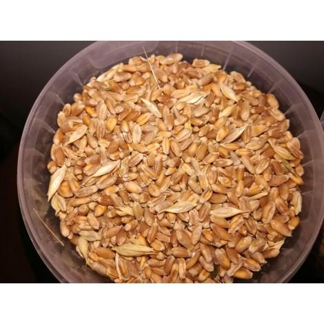 Субстрат Пшеница