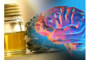 Каннабидиол улучшает память – учёные доказали