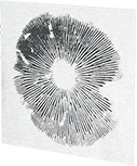 catalog/slides/spore-print-uatrava.png